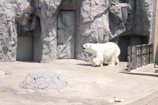 旭山動物園2.jpg